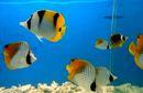 Government Aquarium